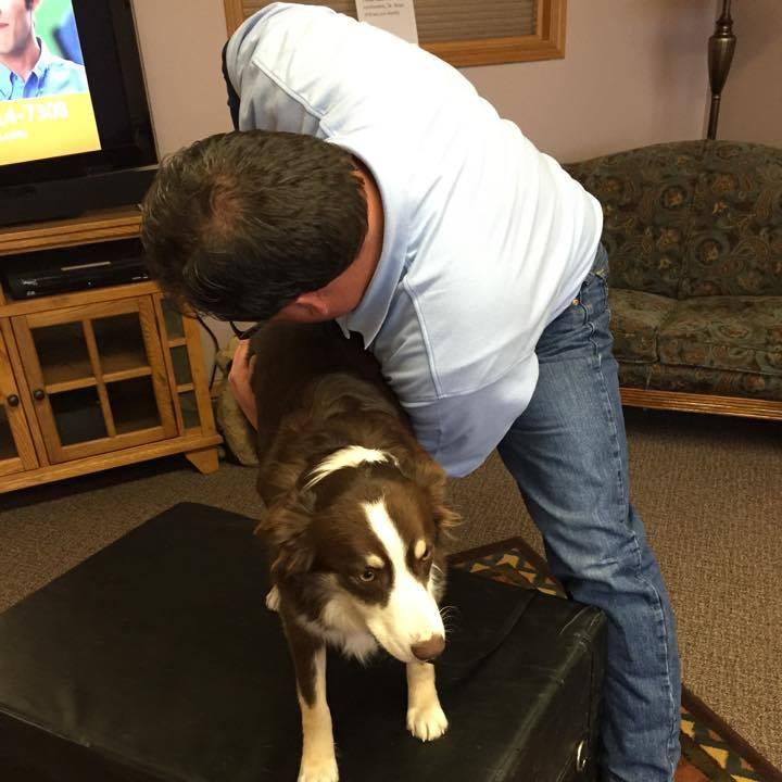 dog-adjustment
