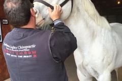 grayhorse-brians-back