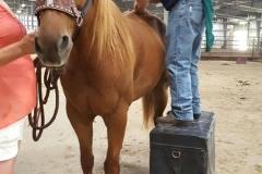 sorrel-adjusting-rear