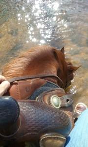 CSI-Pad-horse-in-water