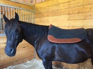 CSI-Saddle-Pad-Smoky