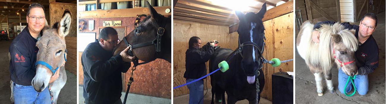 Equine Chiropractic Services